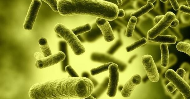 bacteries-intestinales-sante-digestion-obesite-regime-poids-fitskeen