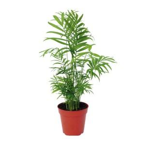palmier-bambou-appartement-bienetre-fitskeen