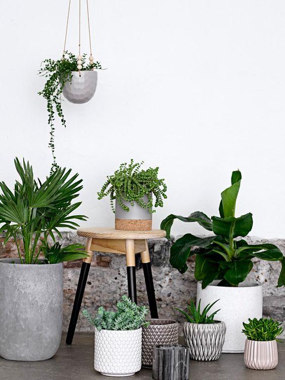 plantes-vertes-depolluantes-maison-deco-fitskeen-pinterest