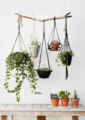Bien être : des plantes dépolluantes pour lamaison